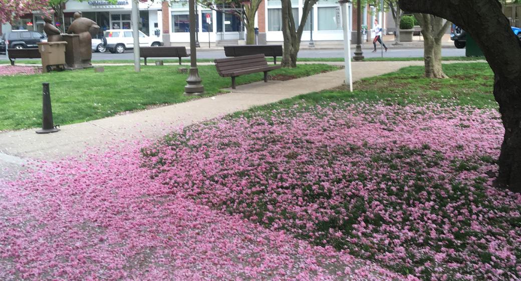 IMG_0932 Latham park in bloom 1040×556