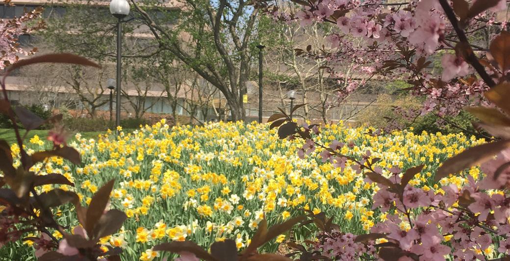 vets park in bloom 1040×533