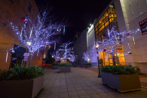 Holiday Light Program | Stamford Downtown - This is the place!